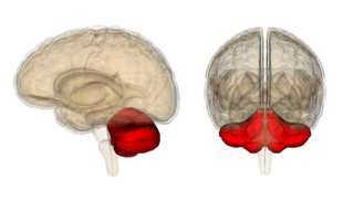 Why Mapping Cerebellum–Prefrontal Cortex Circuitry Matters